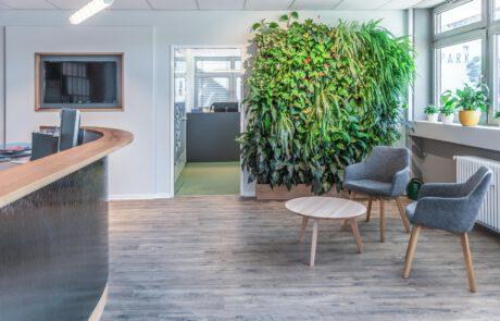Büro einrichten mit grüner Wand begrünter Wand mit Pflanzen